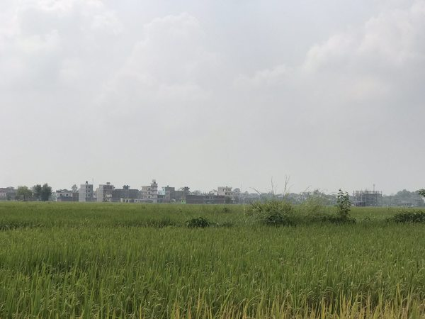Land for Sale at Lumbini Bazar, Rupandehi