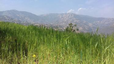 3 Ropani Land For Sale In Khawa, Near Dhulikhel