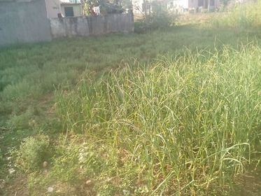 Land for Sale at Mangalpur, Chitwan