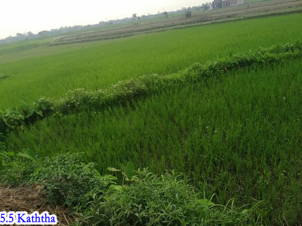 Beautiful Land for Sale at Ratnanagar- 09, Chitwan