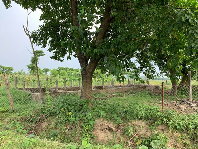 land_for_sale_at_Jhapa_(29).jpg