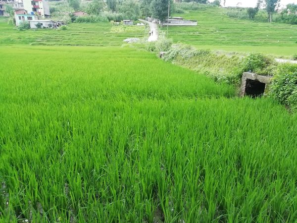 Land for Sale at Jhaukhel, Bhaktapur