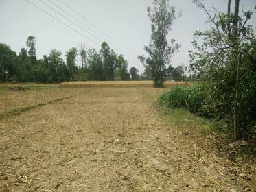 Land For Sale at Mahendranagar, Kanchanpur
