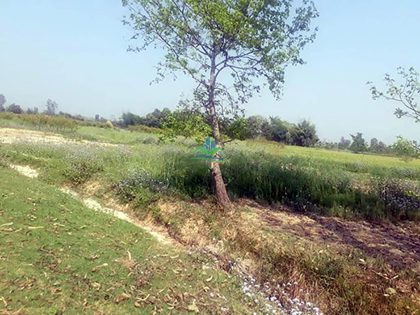 Land for Sale at Bansgadhi, Bardiya